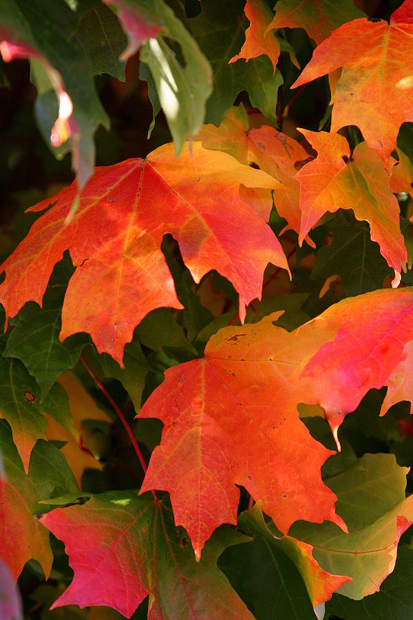 Autumn Photograph - Autumns Peak by Paula Tohline Calhoun