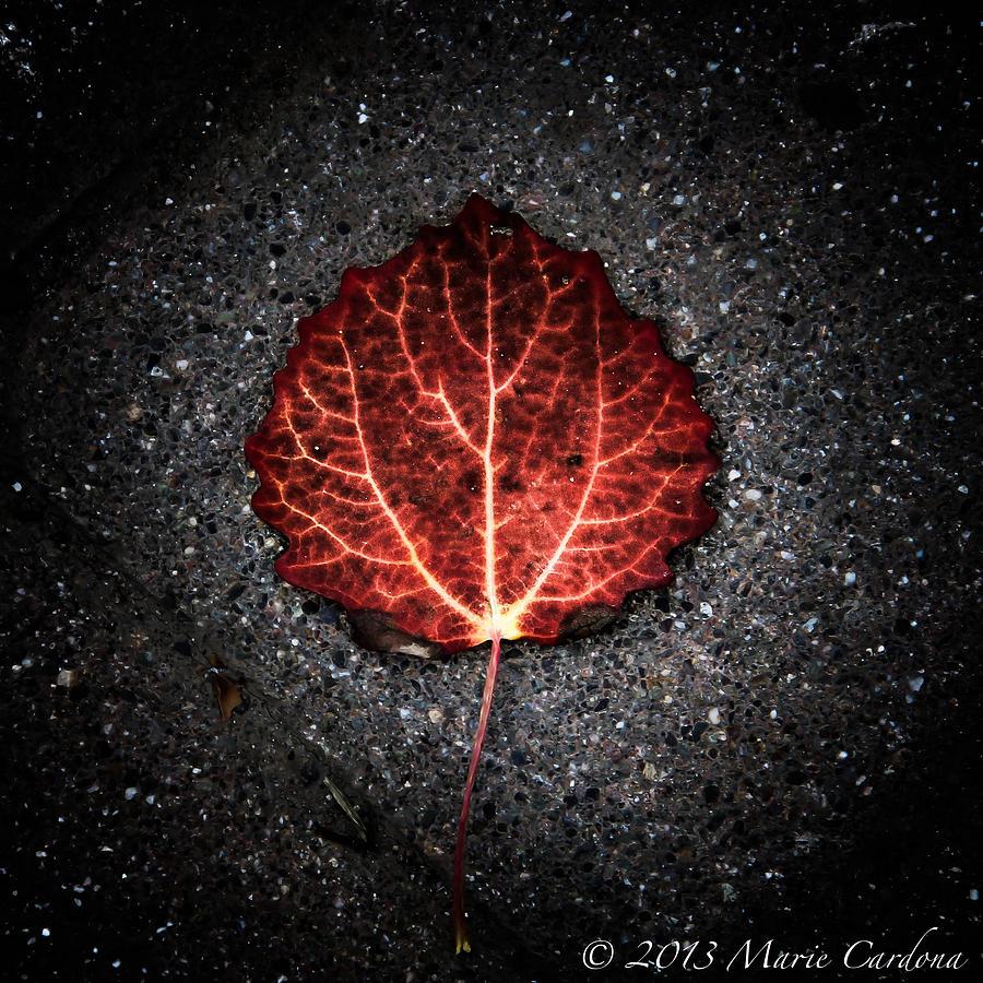Autumns Pulse I Photograph by Marie  Cardona