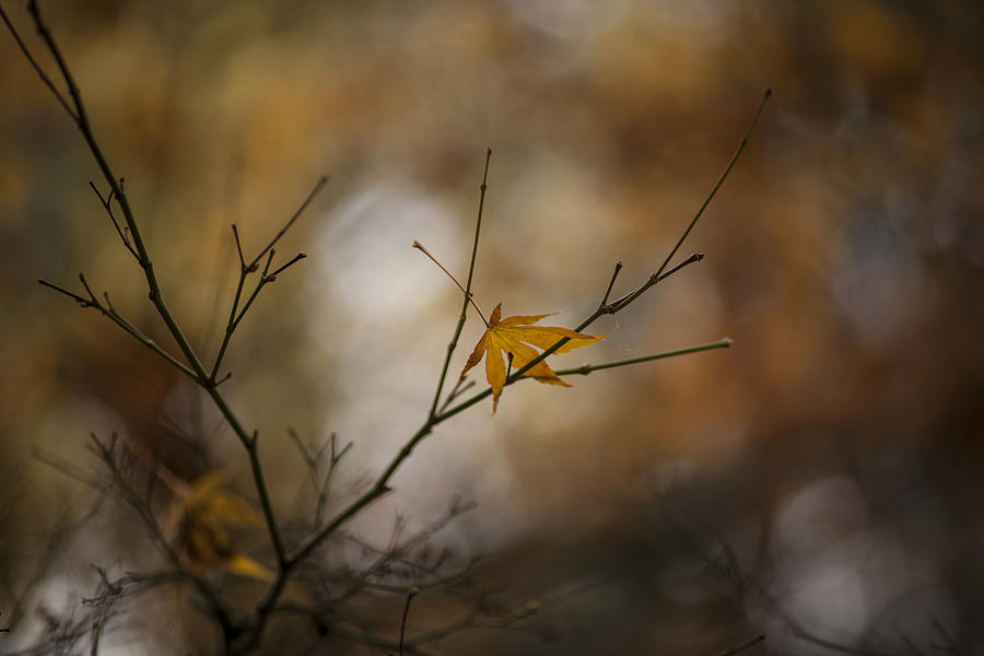 Fall Colors Photograph - Autumns Solitude by Mike Reid