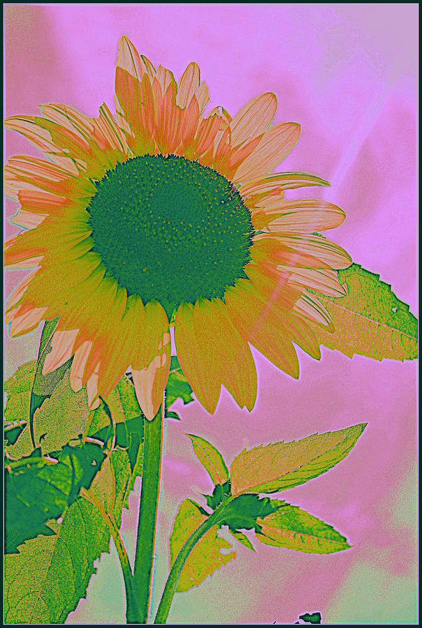 Popart Photograph - Autumns Sunflower Pop Art by Dora Sofia Caputo Photographic Design and Fine Art