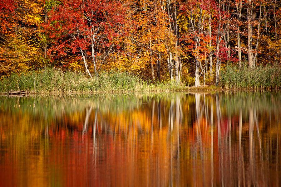 Landscape Photograph - Autumns True Colors by Karol Livote