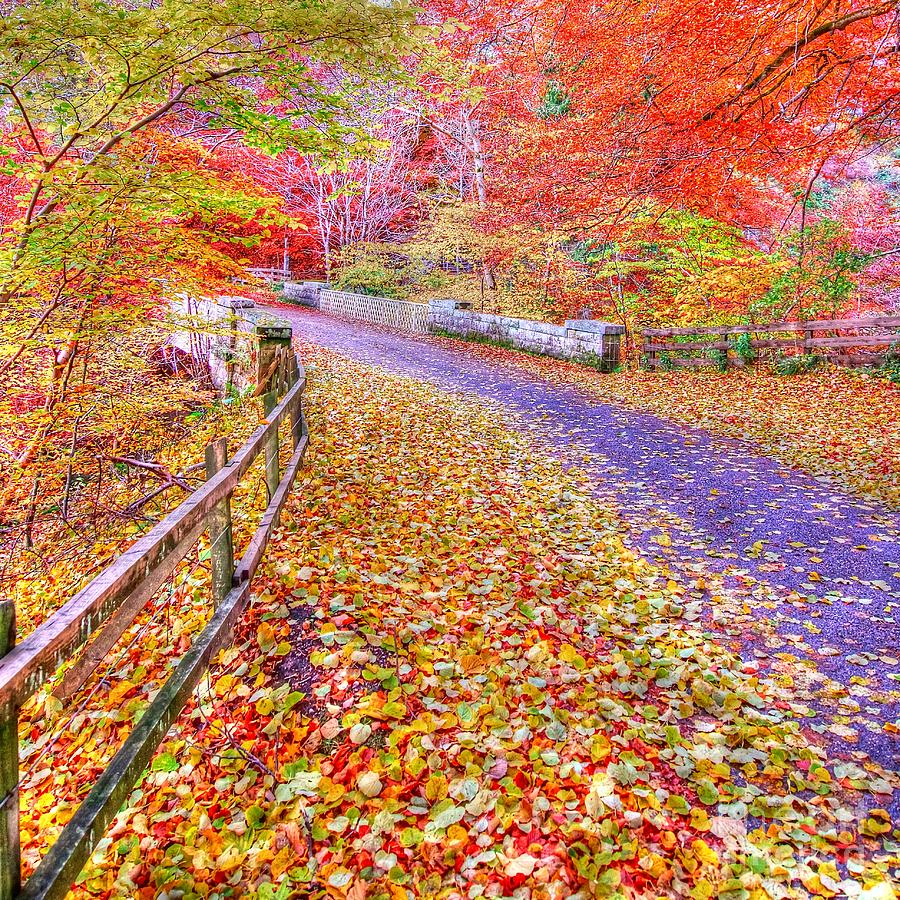 Colourful Photograph - Autumns Way Rouge by John Kelly