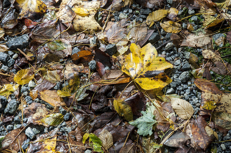 Autumns Yellow Photograph