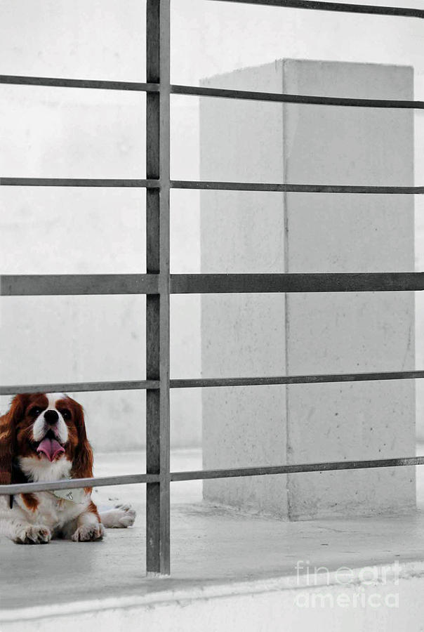 Dog Photograph - Awaiting The Master by Jost Houk