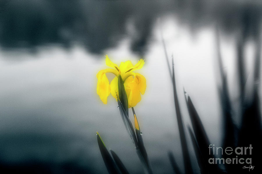 Iris Photograph - Awakening by Scott Pellegrin