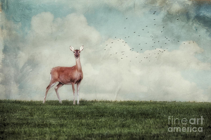 Deer Photograph - Aware by Lois Bryan