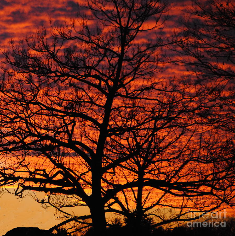 Longwood Gardens Photograph - Awesome Winter Sunset - Longwood Gardens - Square by Jacqueline M Lewis