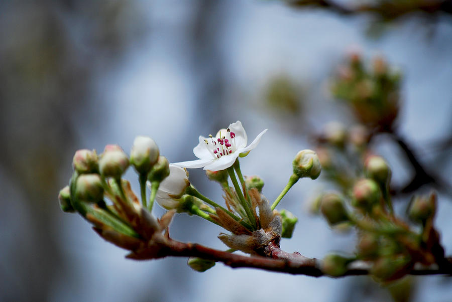 Blossom Photograph - #awizardmusthavepassedthisway by Becky Furgason