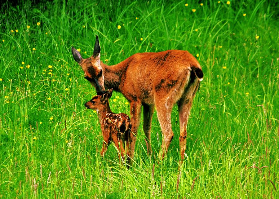 Deer Photograph - Aww Mom by Benjamin Yeager