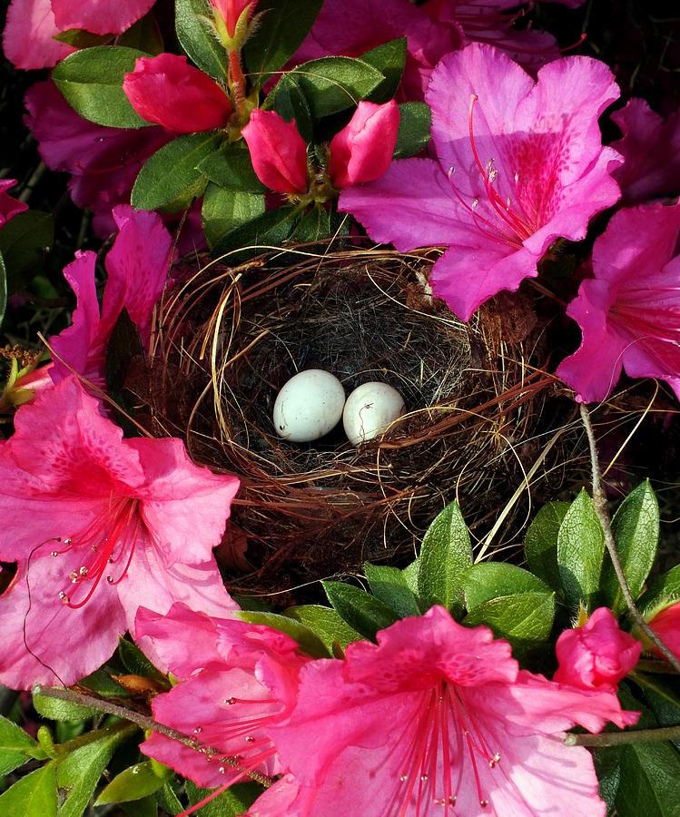 Bird Nests Photograph - Azalea Surprise by Karen Wiles
