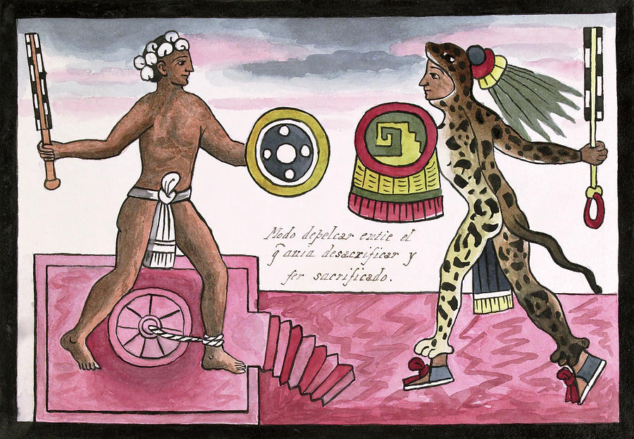 Human Photograph - Aztec Sacrificial Fight by Library Of Congress