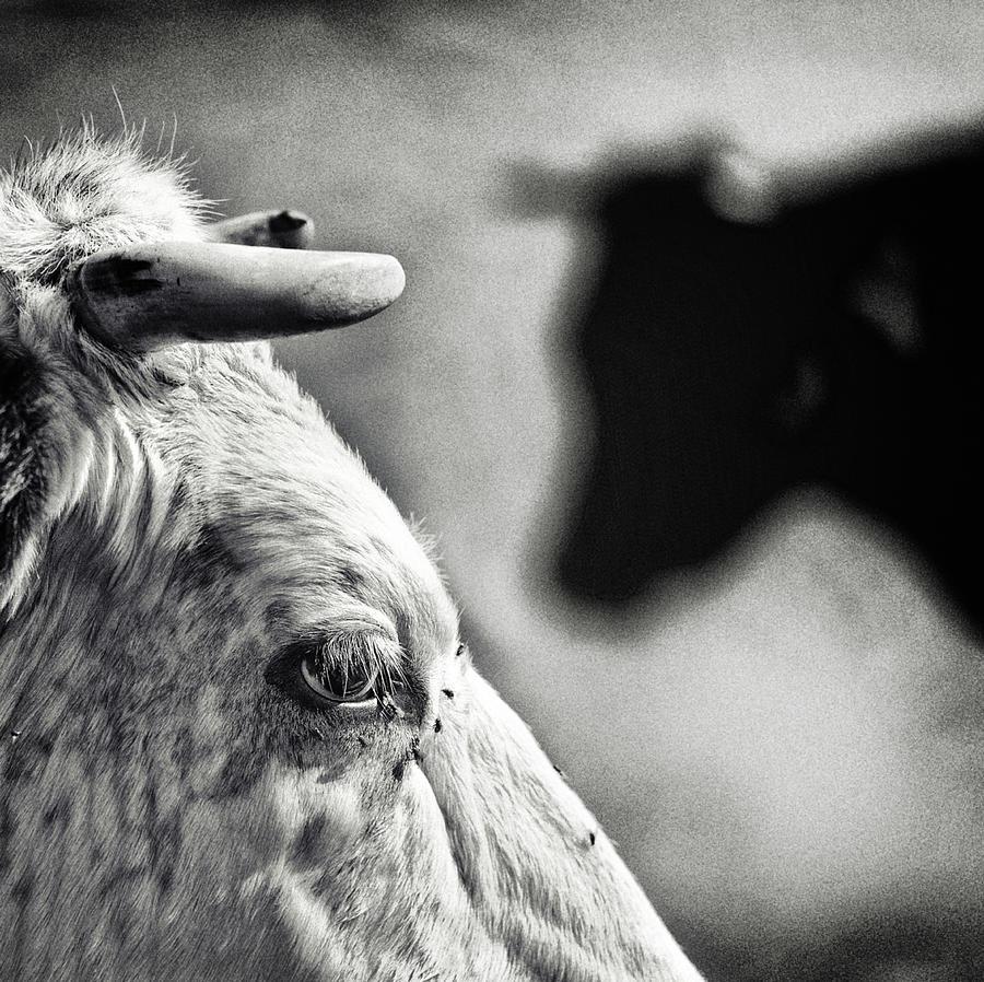 Everyday Photograph - B & W by Piet Flour