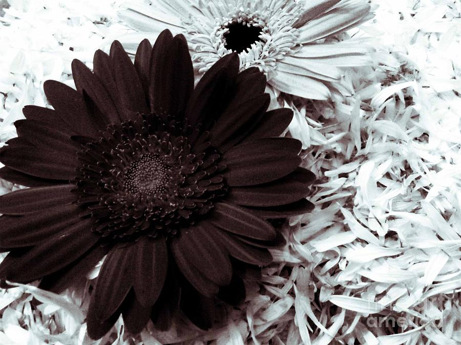 Flora Framed Prints Canvas Prints Photograph - B/w Flower by Ankeeta Bansal