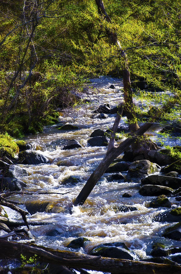 Babbling Photograph - Babbling Brook by Bill Cannon