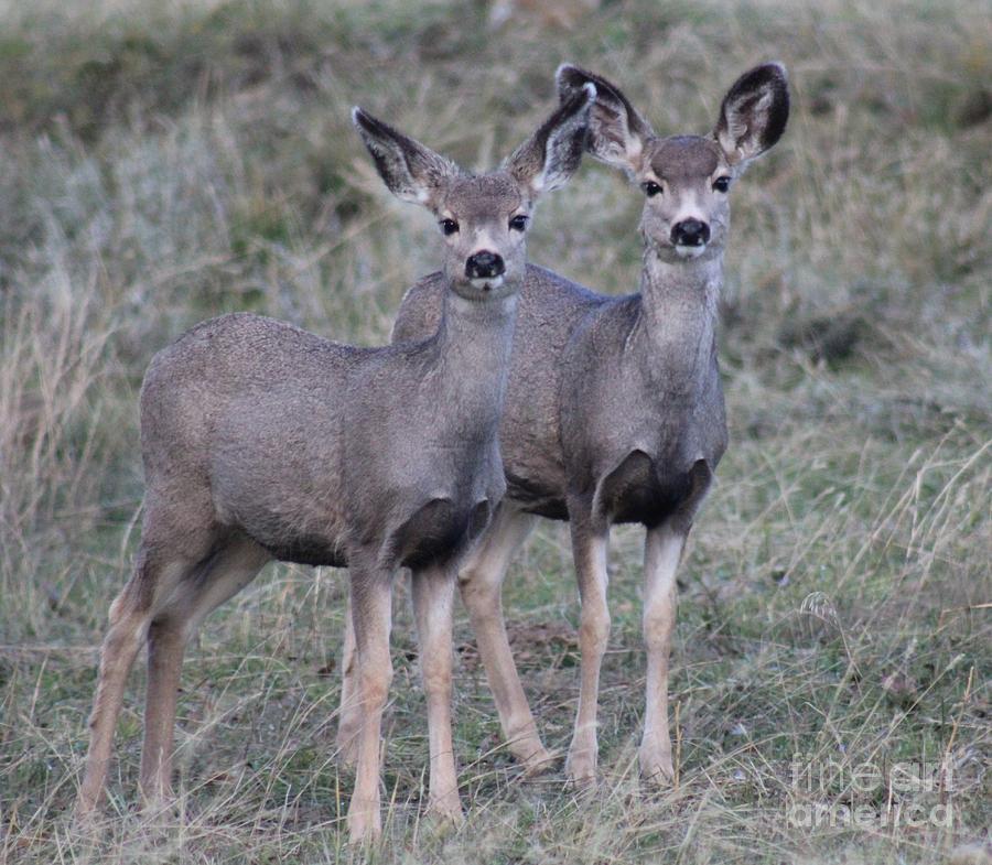 Deer Photograph - Babies Waiting by Brenda Henley