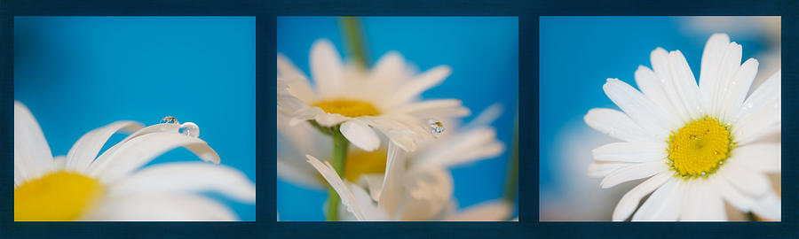Baby Blue Photograph - Baby Blue Triptych by Lisa Knechtel