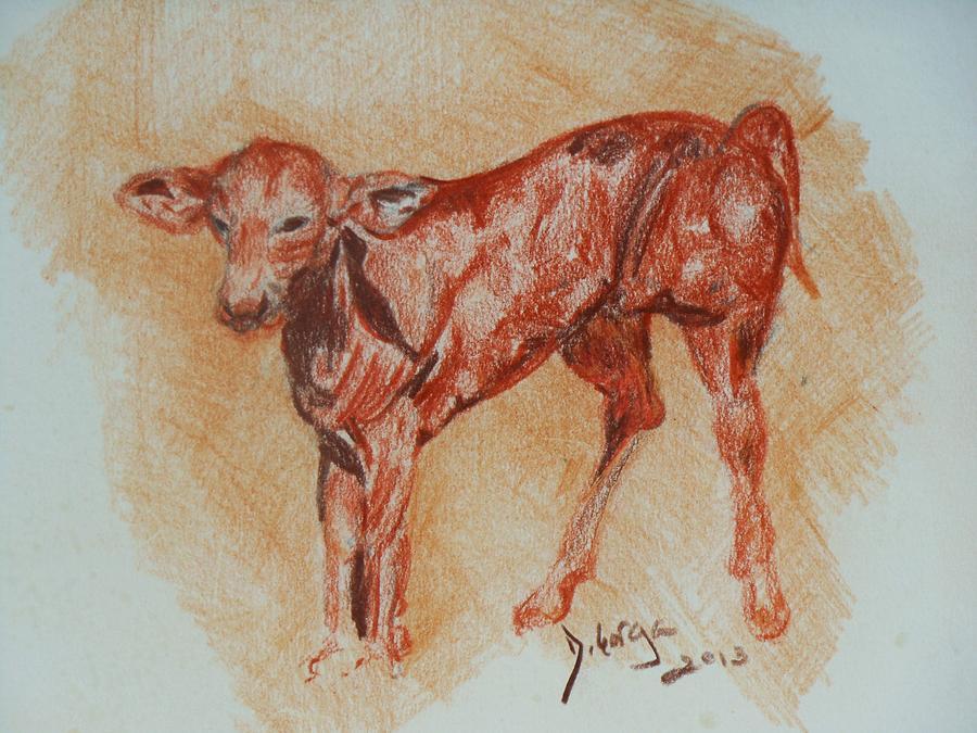 Baby Animals Drawing - Baby Calf by Deborah Gorga