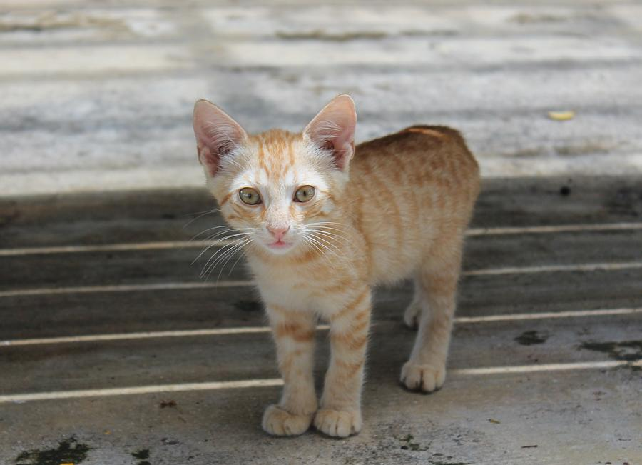 Orange Photograph - Baby Kitty by Catie Canetti