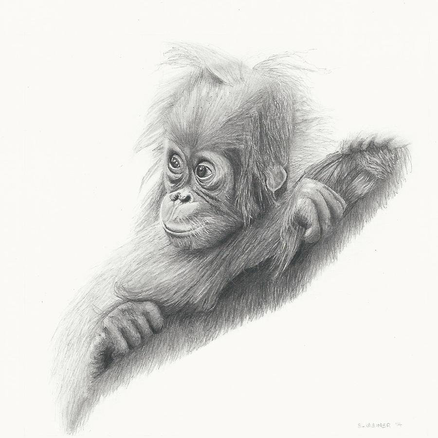 orangutan drawings fine art america