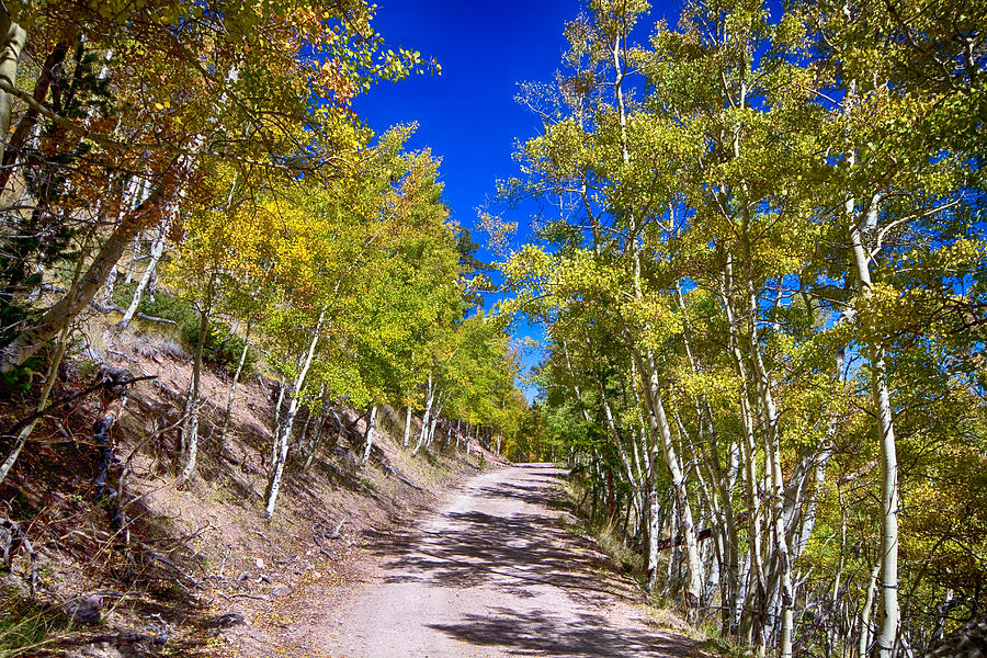 Autumn Photograph - Back Country Road Take Me Home Colorado by James BO  Insogna
