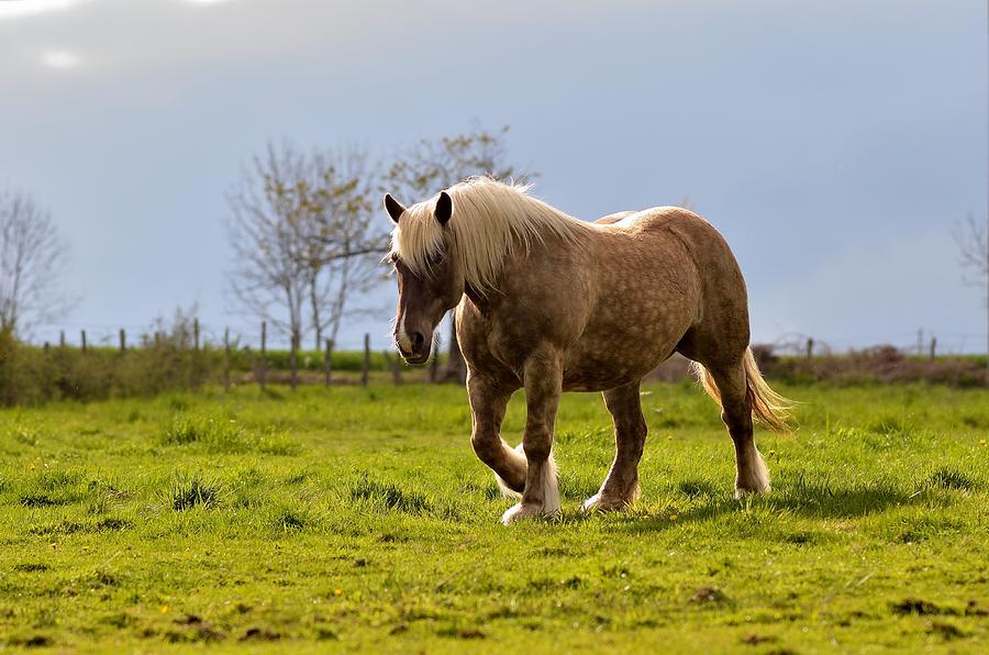Nice Photograph - Back light horse by Patrick Pestre