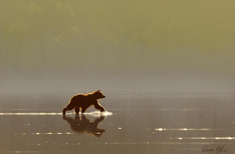 Bear Digital Art - Back Lit Grizzly by Aaron Blaise