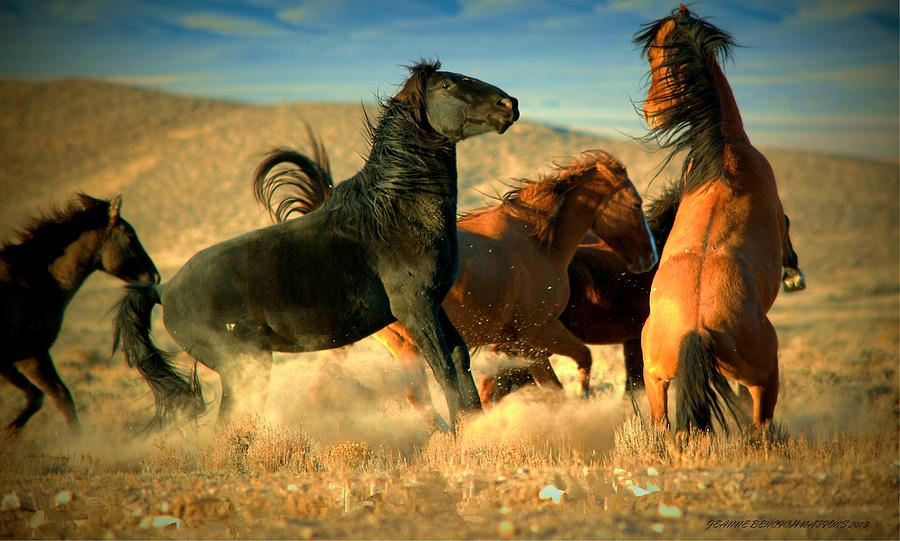 Stallions Photograph - Back Off  by Jeanne  Bencich-Nations