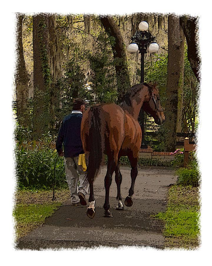 Horse Photograph - Back To The Barn by Wynn Davis-Shanks