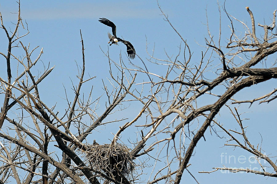 Colorado Photograph - Back To The Nest by Bob Hislop