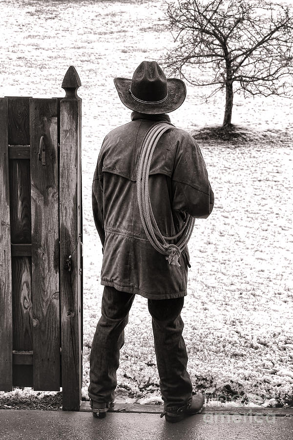 Rodeo Photograph - Back To Work by Olivier Le Queinec