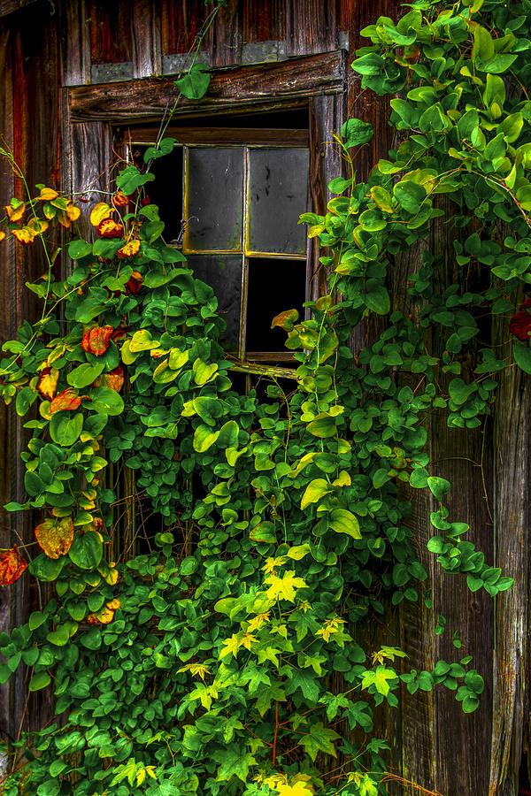 Window Photograph - Back Window by Russ Burch