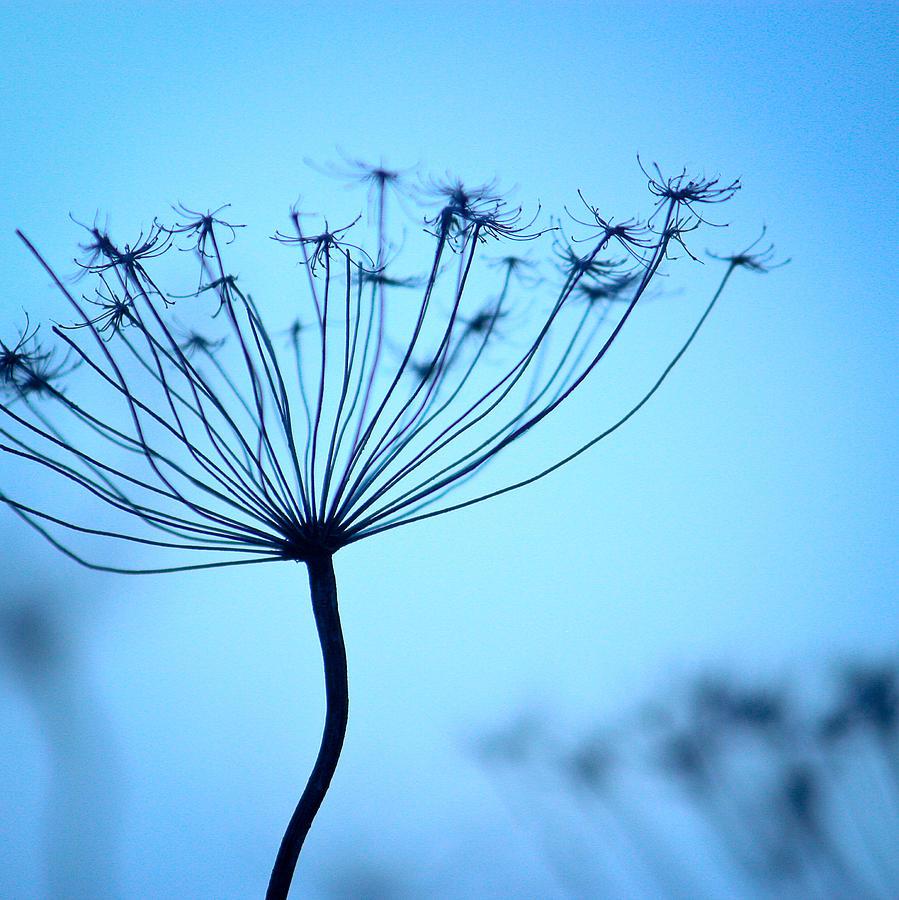 Nature Photograph - Backlight II  by Rani Meenagh