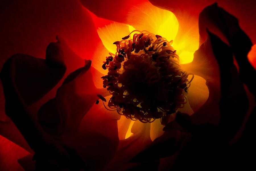 Nature Photograph - Backlit Flower by Fabrizio Troiani