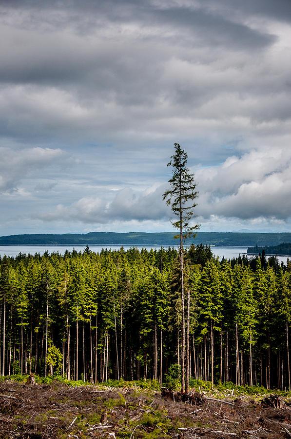 Logging Road Ocean View Photograph