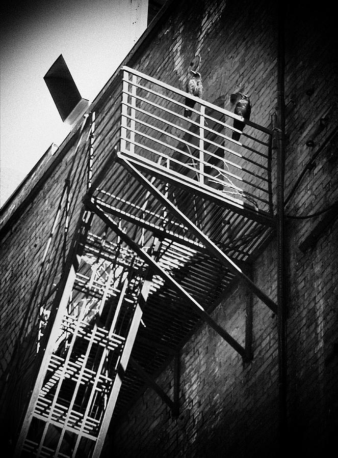 Crow Photograph - Backstreet by Akos Kozari