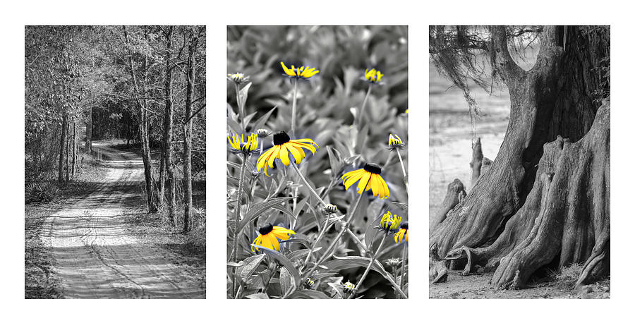 Triptych Photograph - Backwoods Escape Triptych by Carolyn Marshall