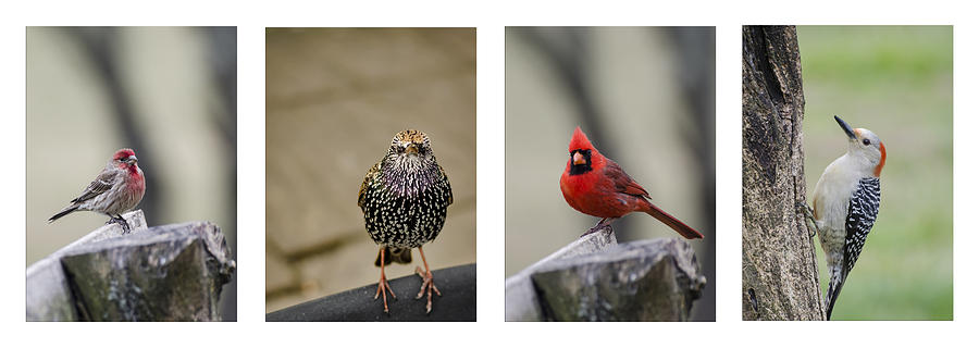 Bird Photograph - Backyard Bird Set by Heather Applegate