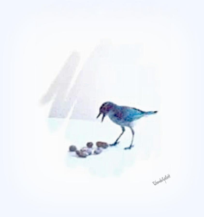 Scrub Jay Mixed Media - Backyard Bird by YoMamaBird Rhonda