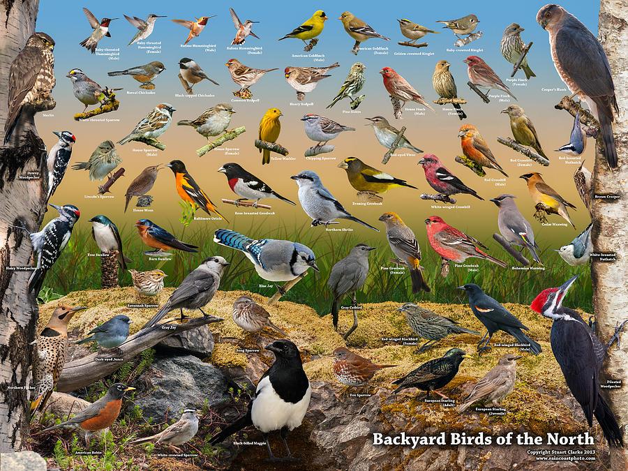 Backyard Birds of The North Photograph by Stuart Clarke