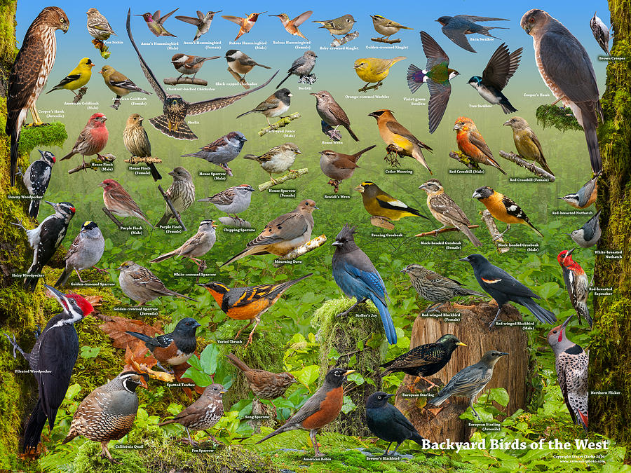 Backyard Birds Of The West Photograph by Stuart Clarke
