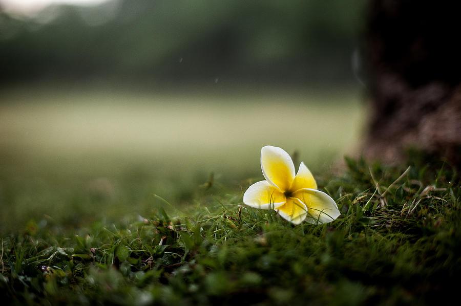 Flower Photograph - Backyard Flower by Jason Bartimus