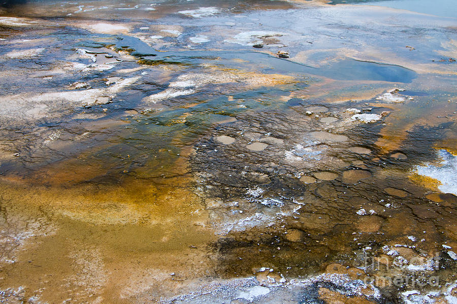 Algae Photograph - Bacterial Mat - 2 by Dan Hartford