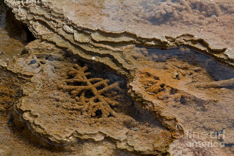 Algae Photograph - Bacterial Mat 8 by Dan Hartford