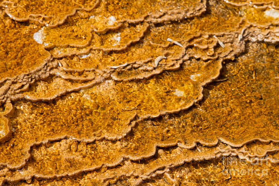 Algae Photograph - Bacterial Mat - 9 by Dan Hartford