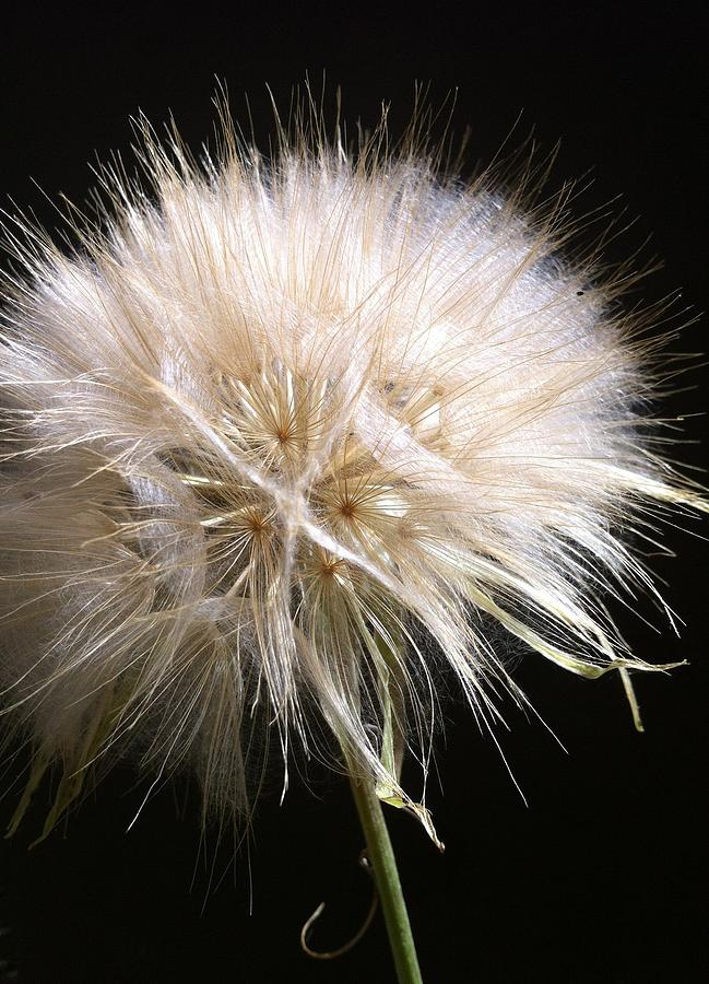 Seed Photograph - Bad Hair Day by Stephanie Aarons