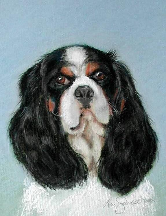 Cavalier King Charles Spaniel Pastel - Bailey The Cavalier King Charles Spaniel by Lenore Gaudet