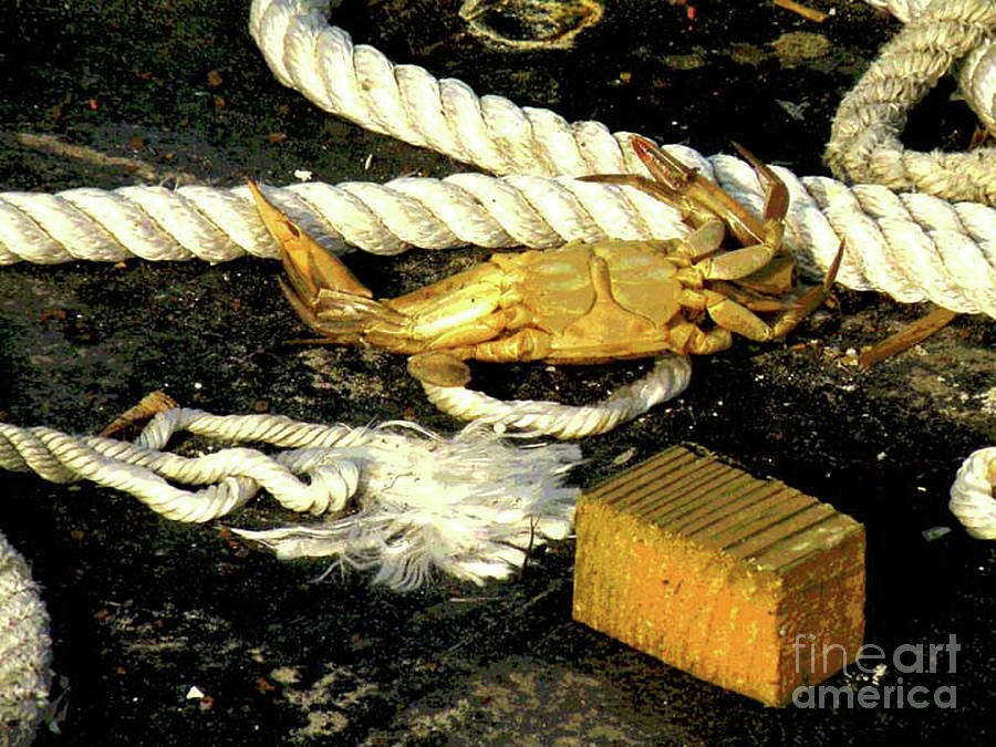 Coastal Marine Life Print Photograph - Baked Crab by Joe Jake Pratt