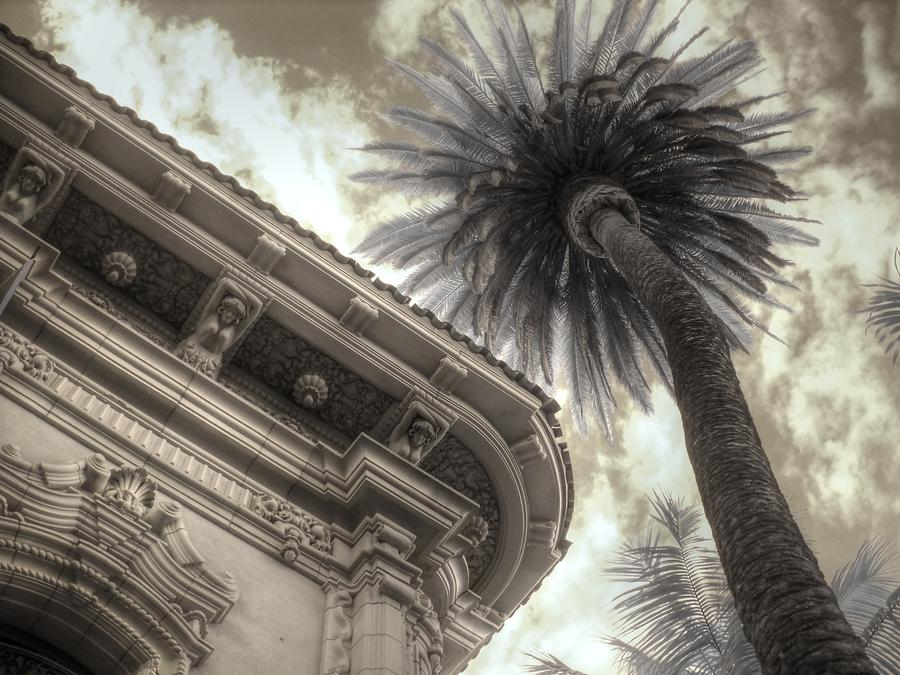 Palm Tree Photograph - Balboa Park Palm Tree by Jane Linders