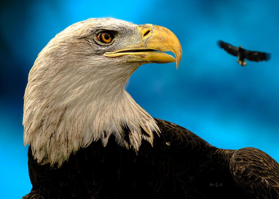 Eagle Photograph - Bald Eagle And Fledgling  by Bob Orsillo