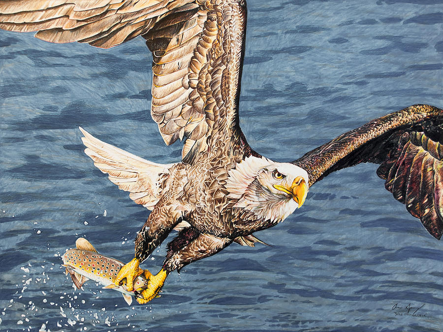 Eagle Catching Fish Drawing Eagle Catching Fish Dr...